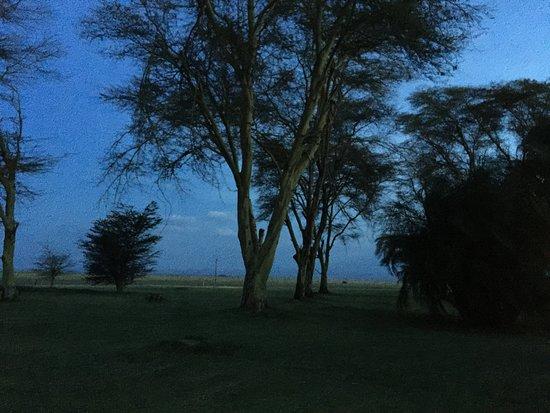 Amboseli National Park-billede