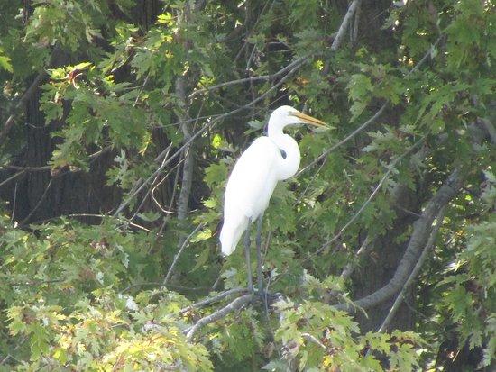 Channahon, Илинойс: The heron