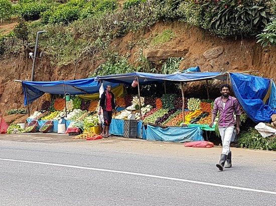 Central Province, Sri Lanka: 20180304_102834_large.jpg