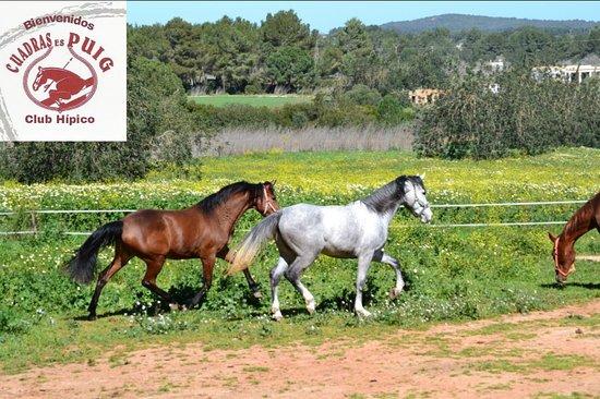 Santa Gertrudis, Spain: club hípico cuadras es puig
