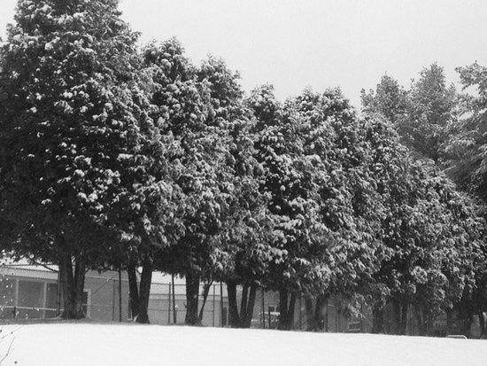 Eagles at Sugarbush: Trees along the pool.