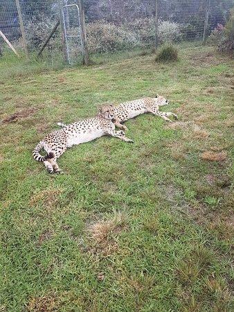 Tenikwa Wildlife Awareness Centre: 20180210_130837_large.jpg