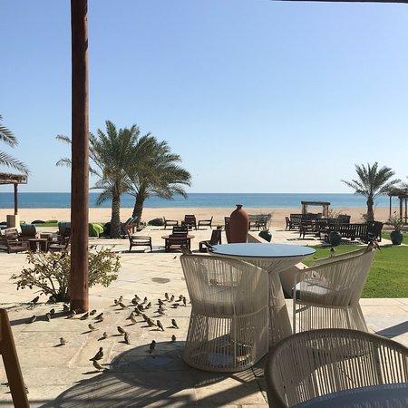 Sir Bani Yas Island, United Arab Emirates: photo0.jpg