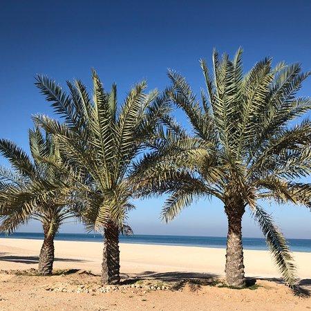 Sir Bani Yas Island, Emiratos Árabes Unidos: photo2.jpg