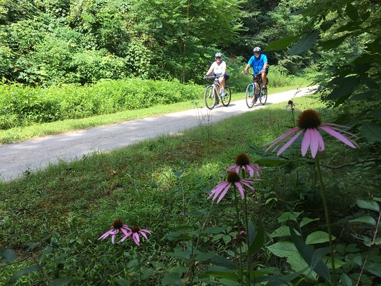 Cumberland, MD: Summer wildflowers along the Great Allegheny Passage near Perryopolis, Pa.