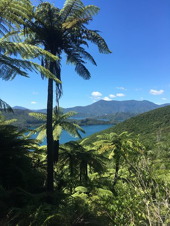 Sea Kayak Adventures: View from the Queen Charlotte Track