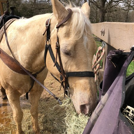 Renegade Equestrian Trailhead