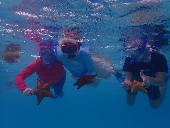 Turneffe Flats: Snorkeling