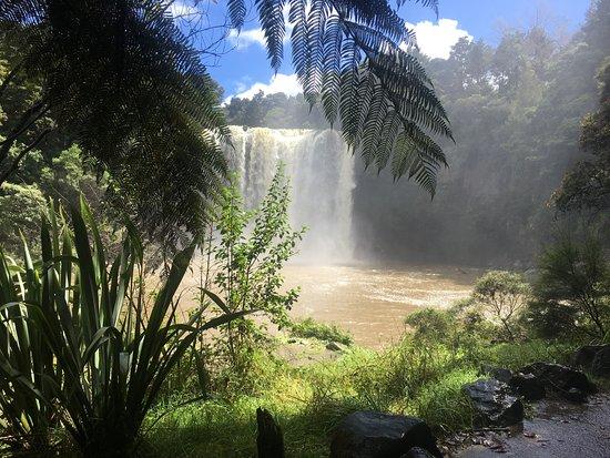 Kerikeri, Nieuw-Zeeland: Through the trees