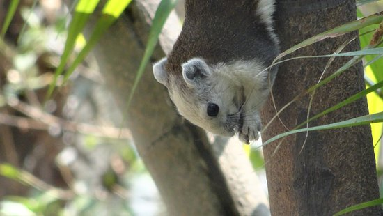 Baan Orapin Bed and Breakfast: Graues Eichhörnchen auf dem wunderschönen Hotelgelände