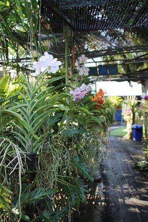 Phuket Orchid Farm : Vue d'ensemble de la ferme (peu fleurie)