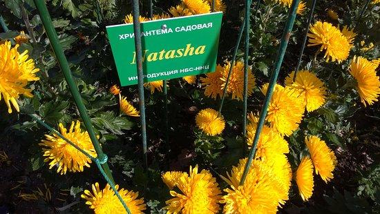 Nikita: На выставке хризантем