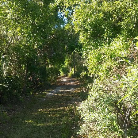 Port Saint Lucie, FL: Pinelands Preserve