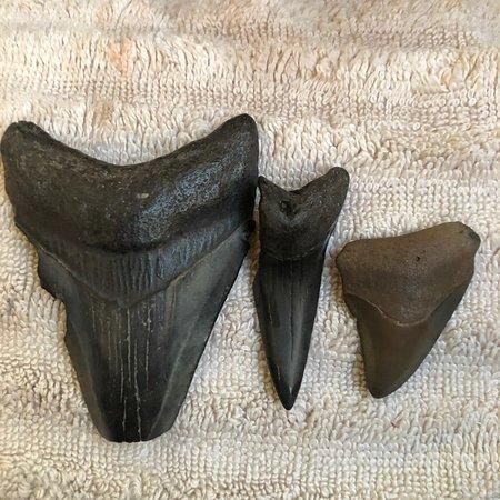 Paleo Discoveries