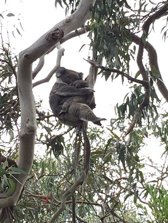 Wattle Hill, Australia: nice sights with wildlife in proximity to hotel