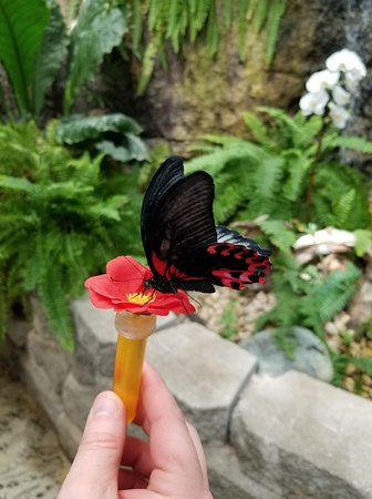 Branson, MO : This is the butterfly I released in the aviary. Came back to visit me.