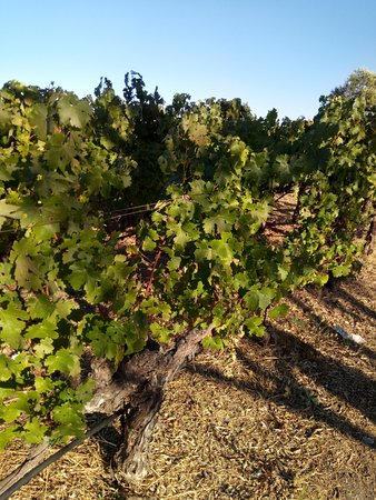 Mondavi Winery Tour Review