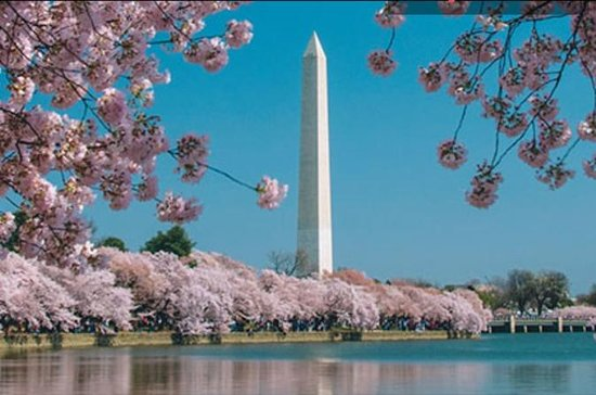 Georgetown Cherry Blossom Sightseeing Cruise