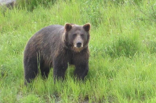 Alaska Wildlife Conservation Center Self-Guided Tour