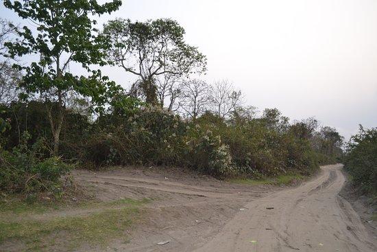Nameri National Park照片