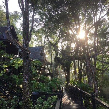 Sepilok, Malaysia: photo2.jpg