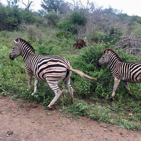 Chasin'Africa: photo7.jpg