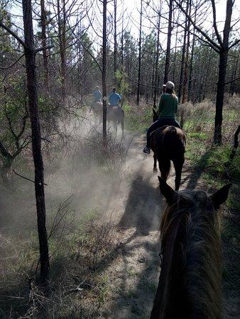 Cactus Jack's Trail Rides: DSC_0474_large.jpg