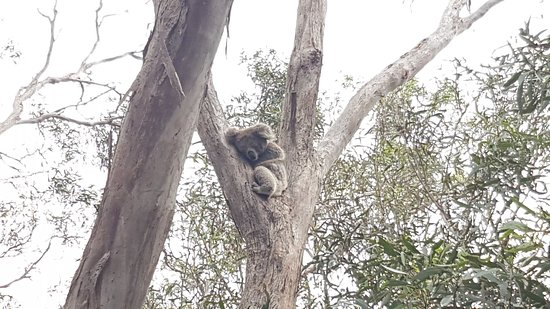 Кингскот, Австралия: 20180306_141803_large.jpg