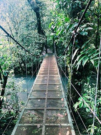 Playa Grande, Κόστα Ρίκα: Rain Forest