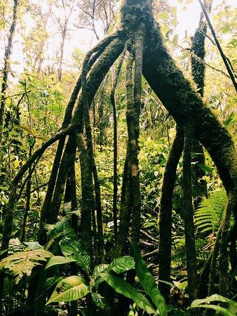 Playa Grande, Κόστα Ρίκα: Rain Fores