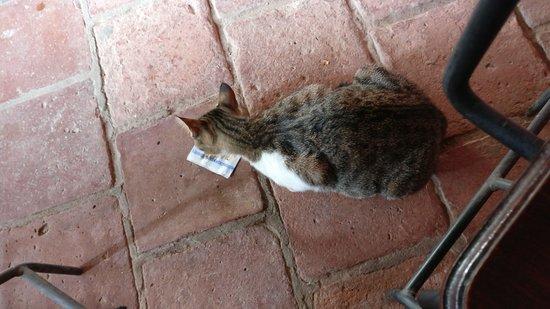 La Casa de las Empanadas Cafayate: la Casa de las Empanadas Cafayate el gato se llama empanadas