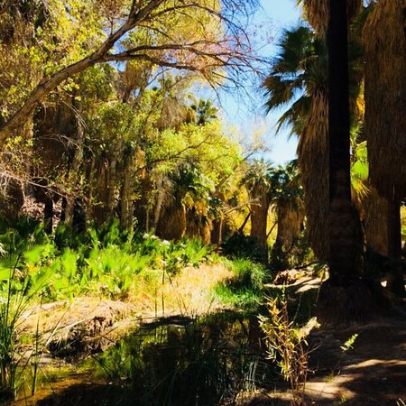 Palm springs hiking trails indian canyon