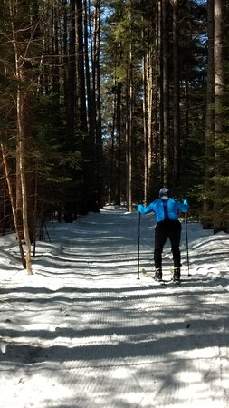Northville, NY: Beautiful groomed trails in wood.
