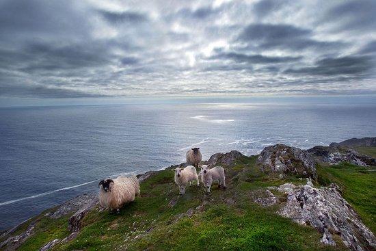 County Cork, Ireland: Southern Peninsulas - Sheeps Head - Cork
