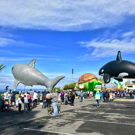 Dana Point, Kalifornien: DANA STAND BEACH, CA! 47th Annual DanaPt. Festival of 🐳WhalesParade🎉@PCH&Selva!