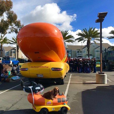 Dana Point, كاليفورنيا: DANA STAND BEACH, CA! 47th Annual DanaPt. Festival of 🐳WhalesParade🎉@PCH&Selva!