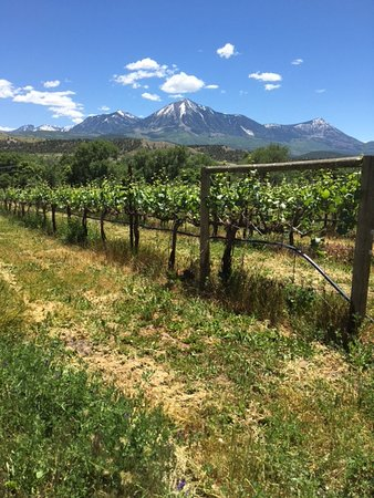Paonia, CO: Our chardonnay grapes love their view.