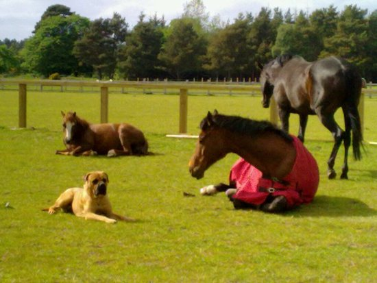 Burghead, UK: As you can see here at Equus we are just one big happy family.