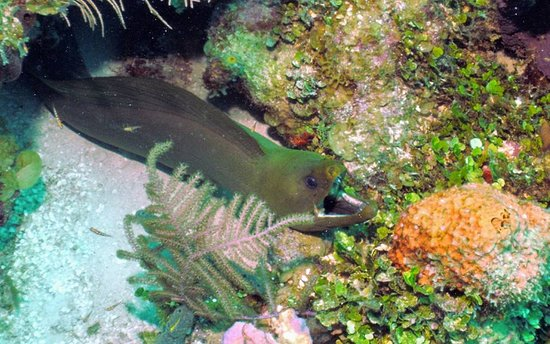 Aqua Scuba Belize : Beautiful eels!