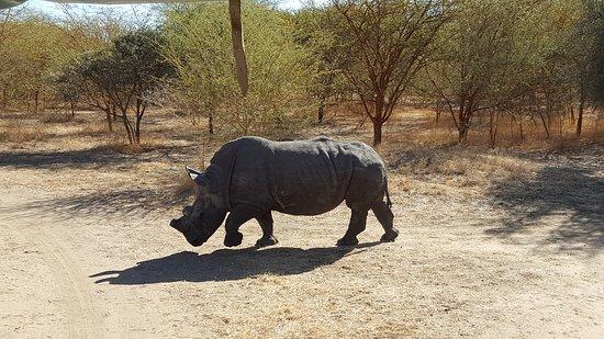 La Petite Cote, Senegal: Rhino