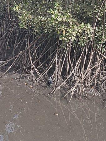 Härlig båttur i mangrove träsket