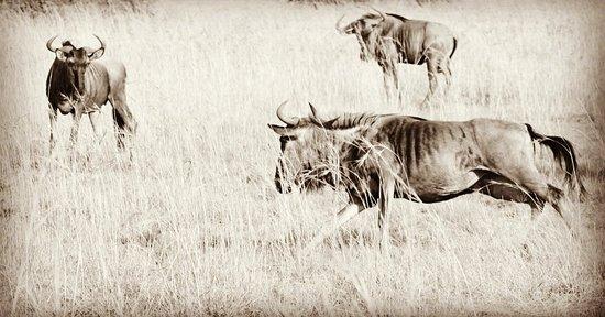 Mabula Private Game Reserve, جنوب أفريقيا: IMG_20180303_214940_714_large.jpg