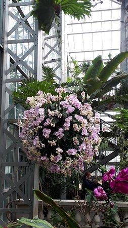 United States Botanic Garden: 20180306_113913_large.jpg