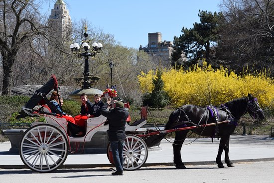 Central Park Carriage Company