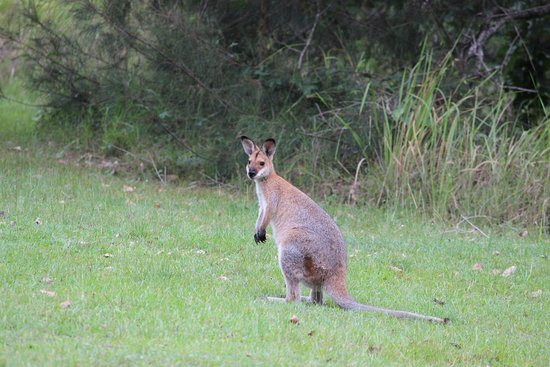 Mt Barney Lodge Country Retreat : Wild life