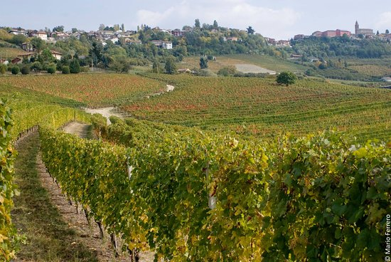 Langhe and Roero Photo