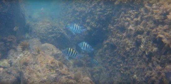 Snorkel en el canal de Barra da Lagoa