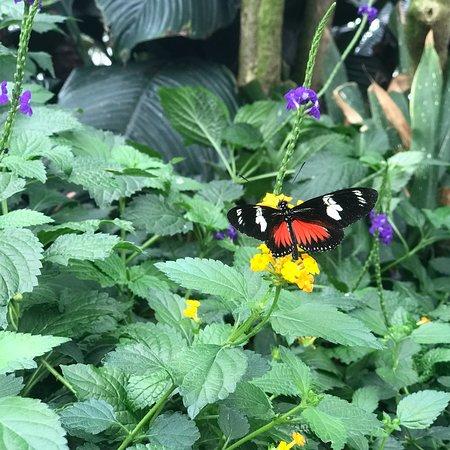 Niagara Parks Butterfly Conservatory: photo3.jpg