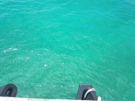Pulau Besar, Malaysia: clear water, can see fishes swimming