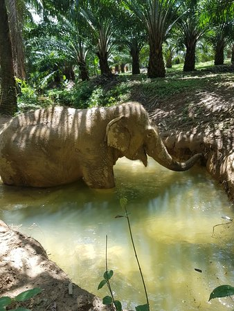 ‪Elephant Retirement Park Phang Nga‬